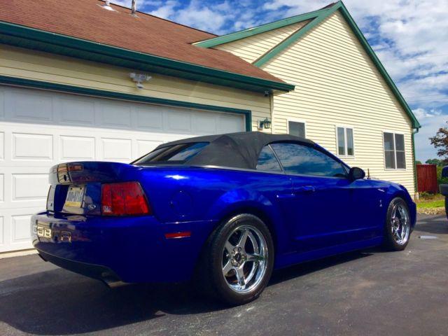 Terminator Mustang Colors